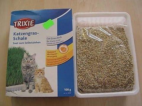 Katzengras von Trixie