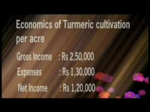 Cultivation Process of Turmeric