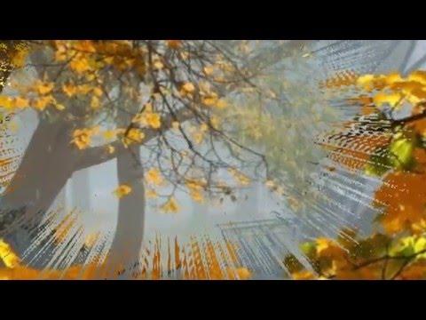 Минусовки / Синяя птица (ВИА) / Клён (Там где клён шумит) 38