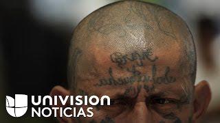 """El gobierno declara la guerra a la Mara Salvatrucha: """"No habrá tolerancia con ellos"""""""