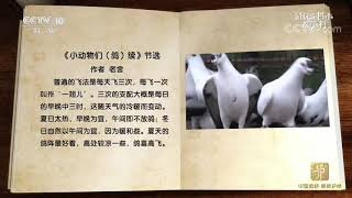 [跟着书本去旅行]北京人对鸽子情有独钟| 课本中国 - YouTube