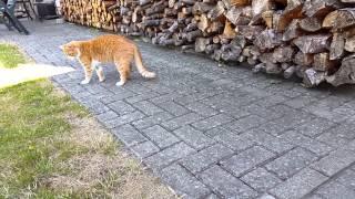 Katze spielt mit Maus