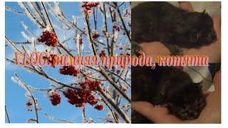 VLOG: Зимние пейзажи, Бизон, Бонифашка и котята:)