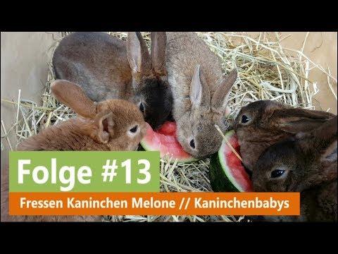 Kaninchen Babys Fressen Melone Superniedlich Youtube