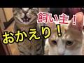 【ただいま!】久しぶりの飼い主に猫たちの反応は・・・?!【かわいい】