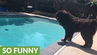 Dog's rescue instincts emerge as pool cover closes