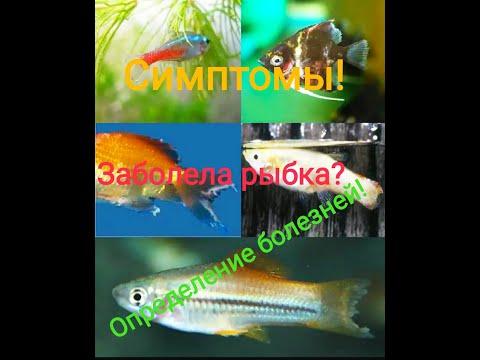 Определение болезней рыб! Их лечение.Пособие начинающим.Лекция для аквариумистов.