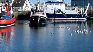 Troon Harbour - Trawlers, Seagulls and Seals