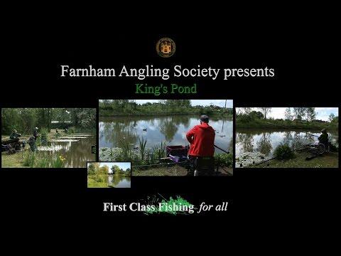 Farnham Angling Society King's Pond Badshot Lea Complex