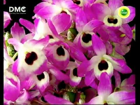 DMC TV Dhammakaya Meditation Session (English)  3rd Video
