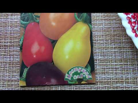 Как называется сорт помидор грушевидной формы