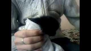 Как кормить маленького котёнка