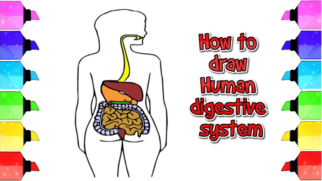 How To Draw Human Digestive System In Very Easy Way Drawing Extra