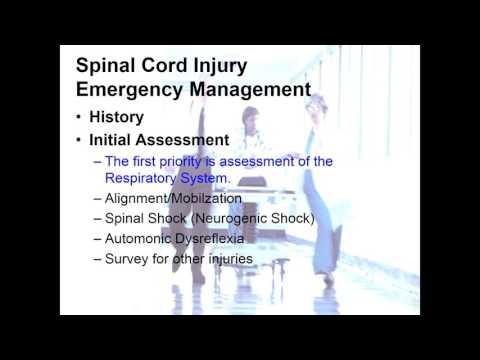 Neuro Spinal Shock Dr. D Lee s final part