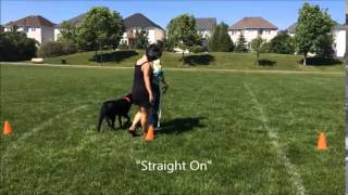 Sandy Benoit And Orvin Rallyo Demo - Canine Touch And Tell 613-695-8870