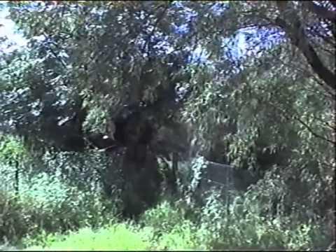 Leo Slezak sings Magische Töne from Karl Goldmarks Die Königin von Saba