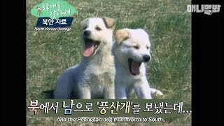 Have you heard of the native dog that North Korea gifted to South Korea?