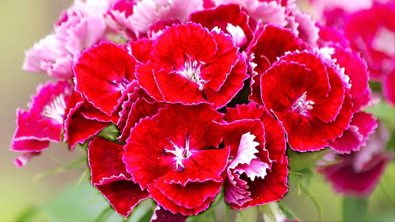 Каталог цветов: названия и фото, описание цветов, виды и сорта 23