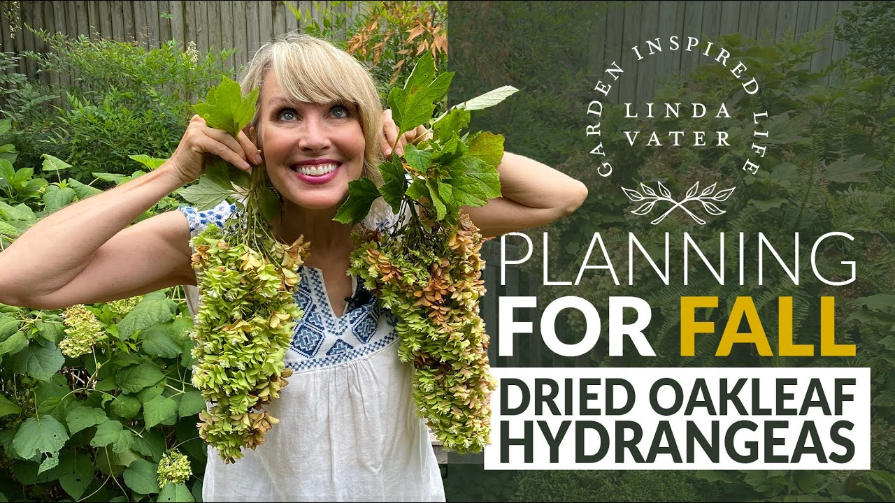 🍂🌾🍂 PLANNING FOR FALL:Dried Oakleaf Hydrangeas || Linda Vater