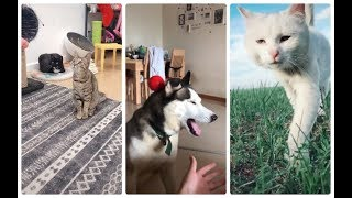 The cutest, cute cats and dogs part 16
