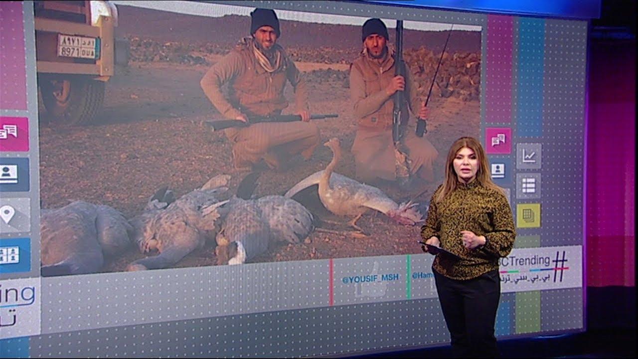 بي_بي_سي_ترندينغ:  صيادون خليجيون يقومون باصطياد غزلان في الأردن بشكل غير قانوني
