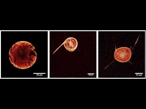 Artificial cells take their first steps