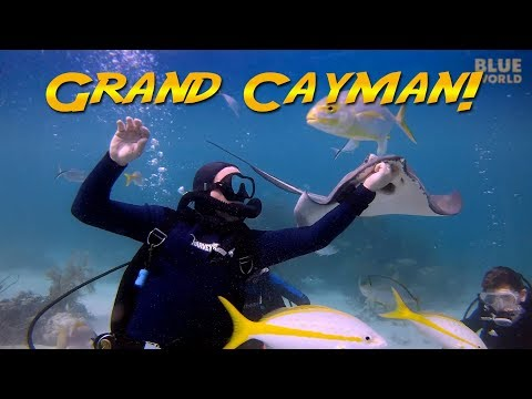 Family Diving Grand Cayman | JONATHAN BIRD'S BLUE WORLD