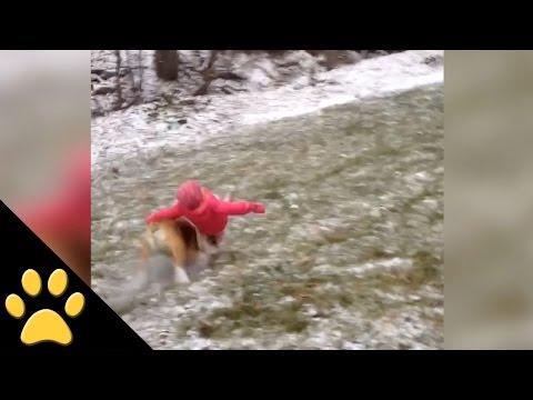 Speeding Dog Knocks Toddle to the Ground