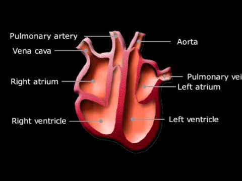 Ks3 biology heart youtube ks3 biology heart ccuart Gallery