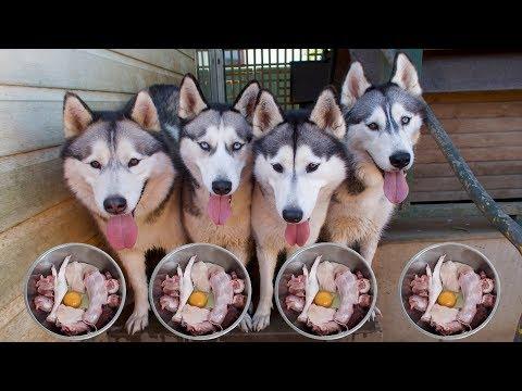 WHAT DO MY 4 HUSKIES EAT ?   RAW FOOD DIET   LIFE WITH 4 HUSKIES   VLOG!