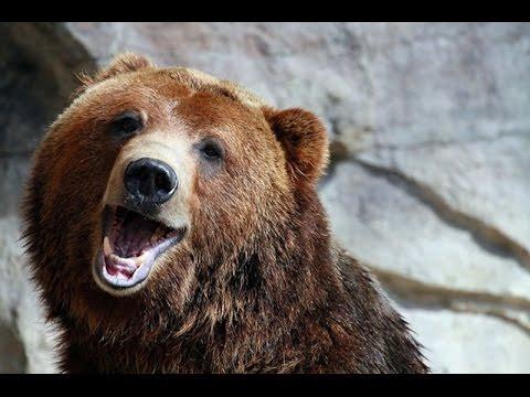 Про медведя... смотреть онлайн бесплатно — хорошее