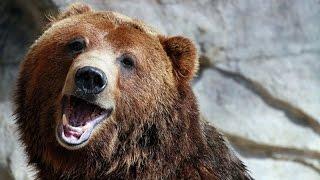 Новая Подборка приколов с медведями 2016