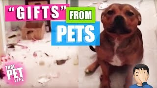Funny Dog and Cat Videos | Pets LOVE Getting Presents and Making a Mess