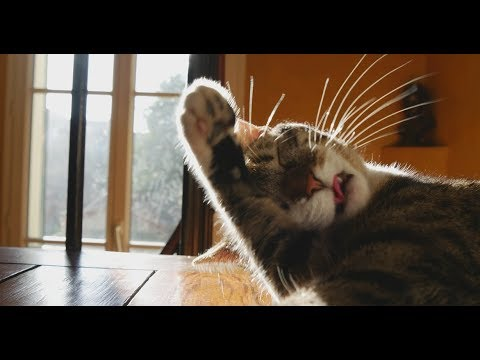 Panasonic GH4 - Cinema 4K Cats