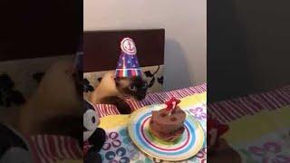 Cat Gets Some Cake    ViralHog