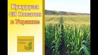 Кукуруза СИ Новатоп в Украине