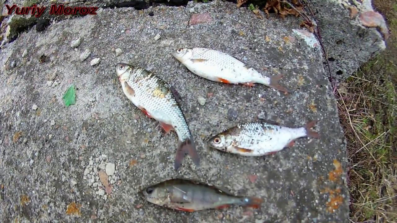 Ловля на косынку | Рыбалка на косынку | Как ловить на косынку