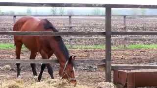 Конный клуб ДИБРОВА - знакомство с лошадьми и сбруей