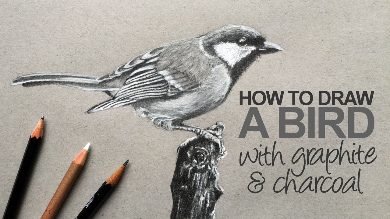 how to draw a realistic bird youtube