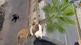 كلب البول ترير (بويكا) المجنون الجزء (3)  مع جمال العمواسي