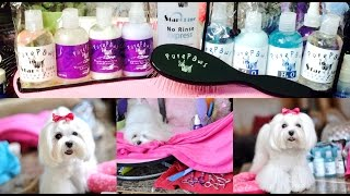 Grooming:  Dolce Morning Routine-july New Goodies - Dolce Flip, Tear Stain Cleaning, Teeth Brushing