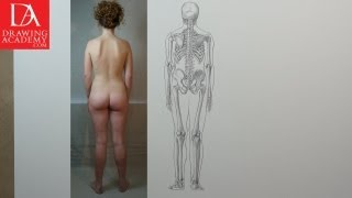 Skeleton Bones presented by Drawing Academy .com 16-1