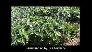 Acres of Organic Tea Estate Land for sale near Coonoor and Ooty, Tamiladu