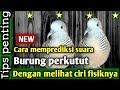 Cara Memprediksi Suara Burung Perkutut Dengan Fisiknya  Mp3 - Mp4 Download