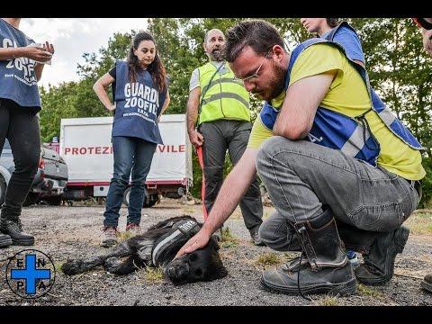 L'intervento dell'Enpa nelle aree colpite dal terremoto in Lazio, Umbria, Marche - agosto 2016