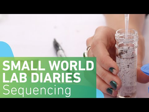 Small World Lab Diaries 9: Sequencing