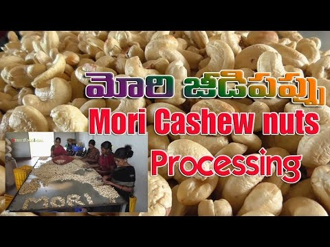 South Indian Andhra Konaseema MORI CASHEW NUTS Processing Jeedipappu