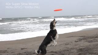 Sony RX100 IV & RX10 II Super Slow Mo Video Dog