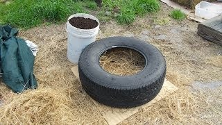 Experiment To Determine If Growing In Tires Is Toxic