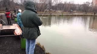Платная рыбалка на Тимирязевском пруду ноябрь.